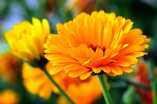 10+ Best Visszér megoldások images | gyógynövények, rheumatoid arthritis, egészség