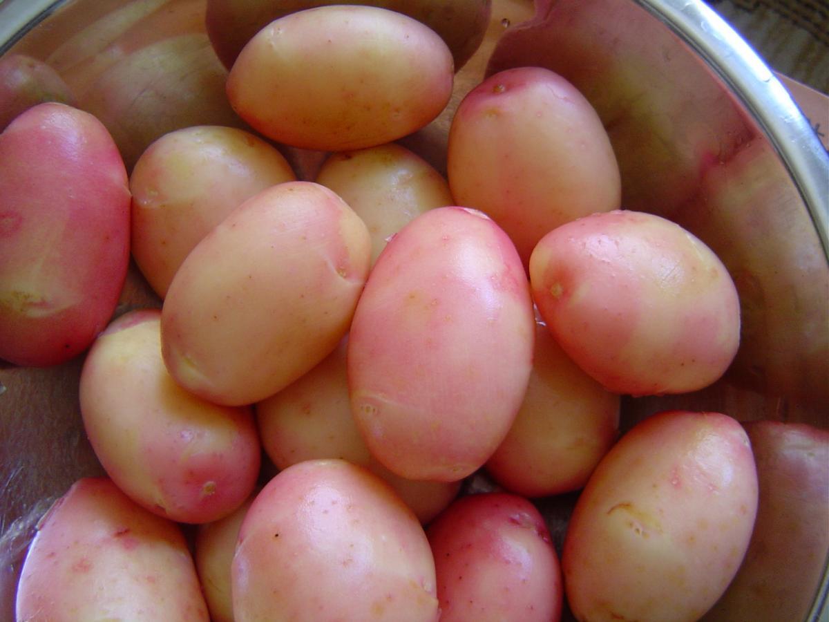 Burgonya fűszer-tinktúra ízületi gyulladás esetén