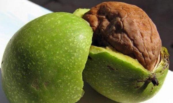 Zöld dió tinktúra kezelés diéta