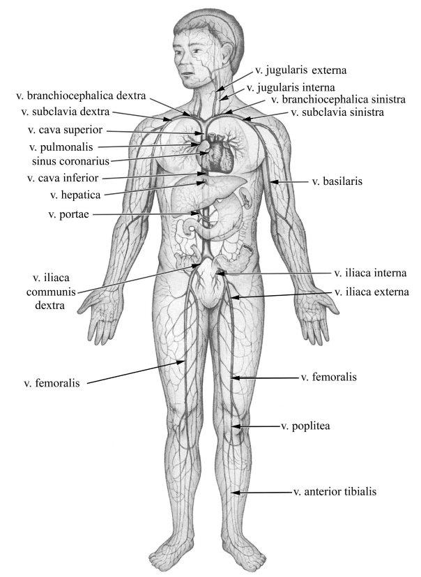 az alsó végtagok visszeres megbetegedéseinek áttekintése