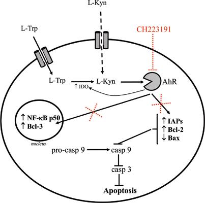 l-tiroxin visszér ellen