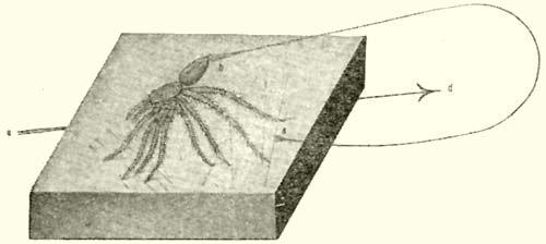 illóolaj a pók erek visszéréből)