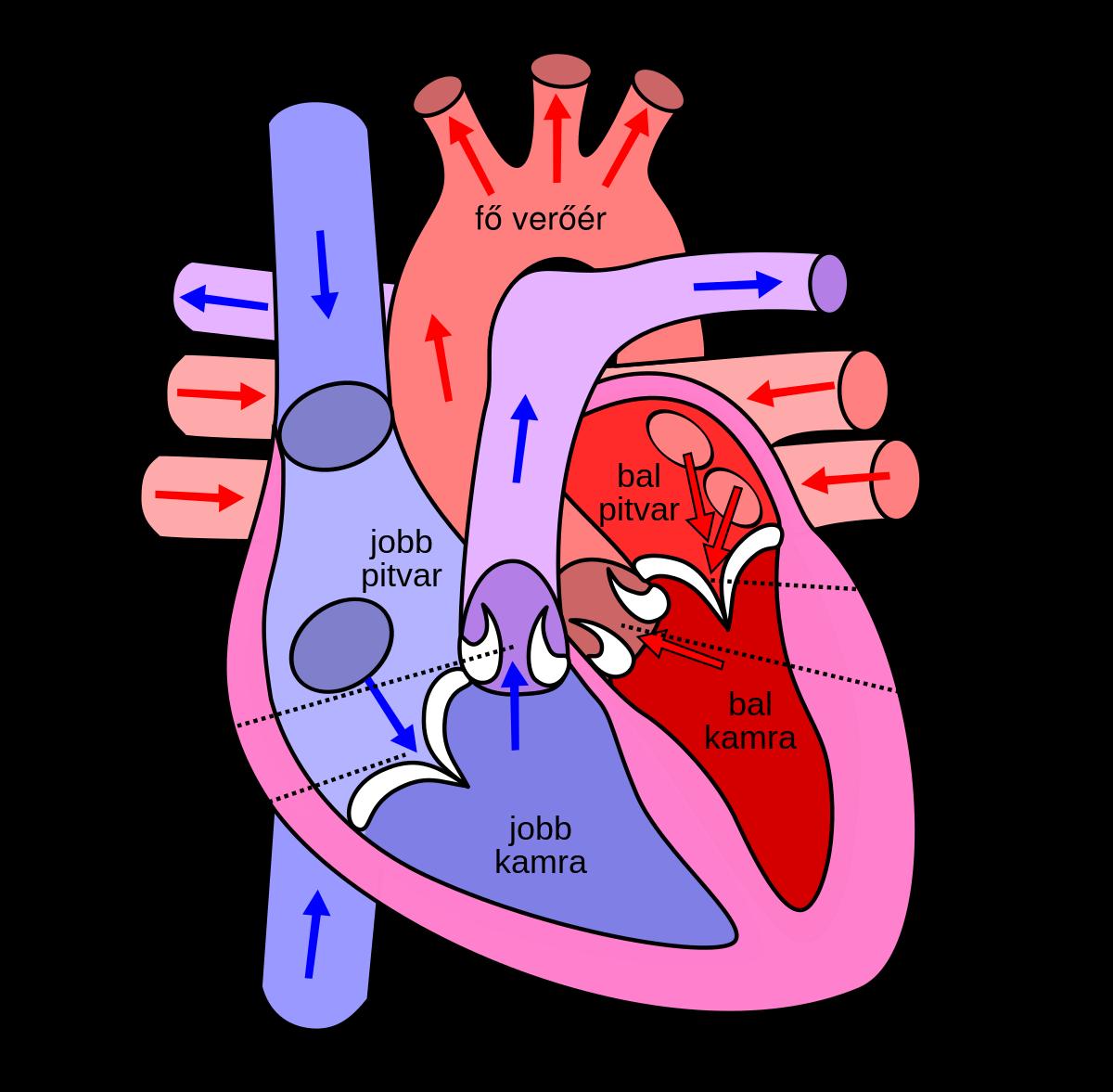 Visszérbetegség / Szív- és érrendszeri betegségek / Témák / Kérdések - válaszok / HáziOrvos