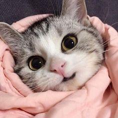 egy macskának visszér)