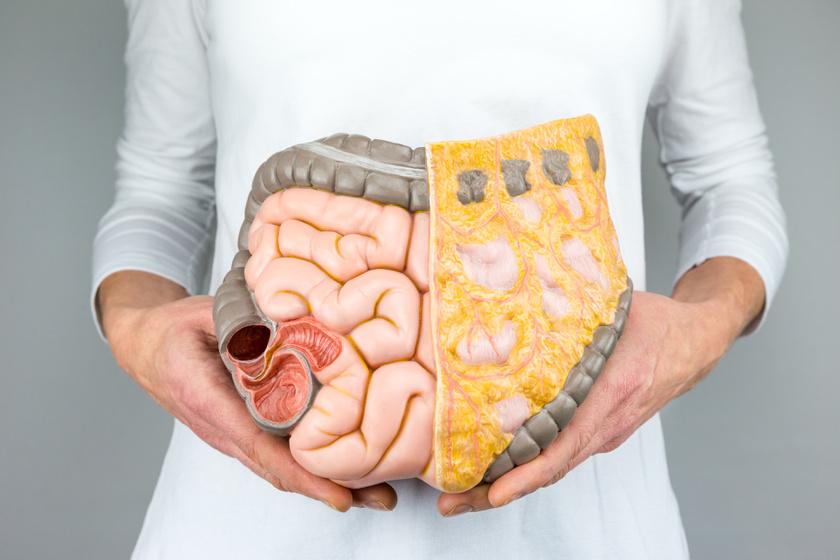 a belső szervek visszerek a nőknél
